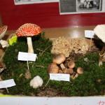 Výstavka hub - práce žáků speciální třídy